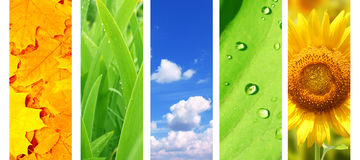 Set of banner with nature details Stock Photography