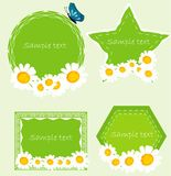 Set banners with camomille. Stock Photos