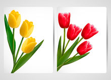 Set of banners with colorful flower Royalty Free Stock Photos