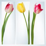 Set of banners with colorful flower. EPS 10 Royalty Free Stock Photos