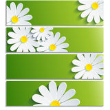 Set of banners with 3d flower chamomile. Isolated on white background. Creative trendy green wallpaper with flowers chamomiles. Vector illustration Stock Photos