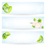 Set of banners with green leaves and flowers Royalty Free Stock Image