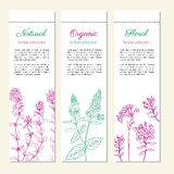 Set of banners with hand drawn sketch mint leaves, peppermint branch, mint flowers, Thyme isolated on white, Natural Stock Photography