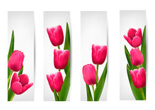 Set of banners with pink flower. Stock Images