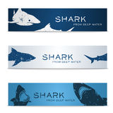 Set of banners with sharks Royalty Free Stock Image