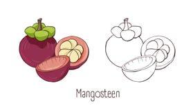 Set barwioni, monochromatyczni konturowi rysunki mangostan odizolowywający na białym tle i Plik ilustracji