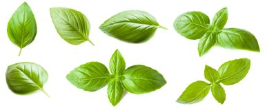 Set of Basil leaf isolated on white background. Macro. Top view.  Royalty Free Stock Photography