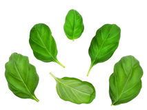 Set of basil leaves. royalty free stock photos
