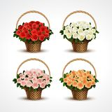 Set Baskets of Roses Isolated Stock Photography