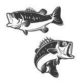 Set of bass fish icons isolated on white background. Royalty Free Stock Photos