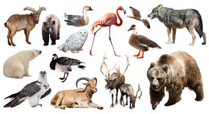 Set of bear and other european animals Stock Images