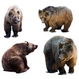 Set of bear over white background Royalty Free Stock Photo