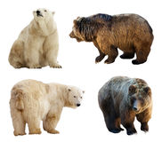Set of bears. Isolated over white Stock Images