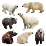 Set of bears over white Stock Photo