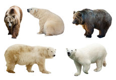 Set of  bears over white background Royalty Free Stock Photography