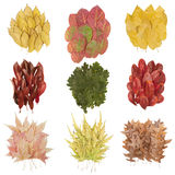 Set of beautiful autumn leaves Stock Photos