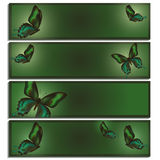 Set of beautiful banner with green butterflies Stock Photography