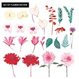 Set of beautiful botanic ,exotic,orchid flowers blooming floral royalty free illustration