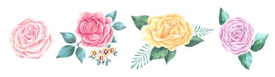 Set of beautiful bouquets flowers of red, pink and gentle peach blooming roses with leaves and buds. Floral design stock illustration