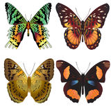 Set beautiful butterfly on white background Stock Image