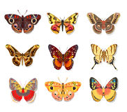 Set beautiful butterfly on white background Stock Photos
