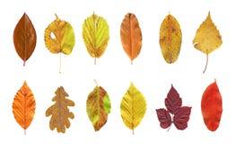 Set of beautiful colorful autumn leaves stock photos