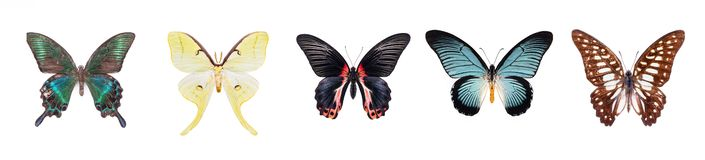 Set of beautiful and colorful butterflies isolated on white. royalty free stock photography