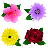 Set of beautiful colorful flowers stock image