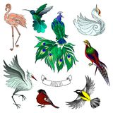 Set of beautiful decorative hand drawn birds, vector illustratio Royalty Free Stock Photo
