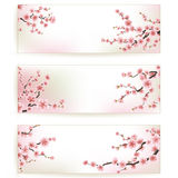 Set of Beautiful Floral Banners. EPS 10 Royalty Free Stock Images