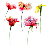 Set of beautiful flowers for design. Watercolor illustration Royalty Free Stock Images