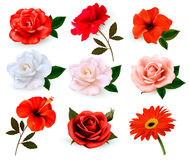 Set of a beautiful flowers isolated on a white background Stock Image