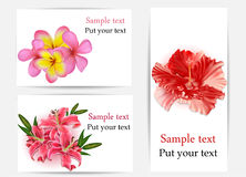 Set of beautiful gift cards with hibiscus, plumeri royalty free stock photo