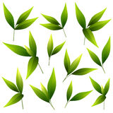 Set of beautiful green leaves Stock Images