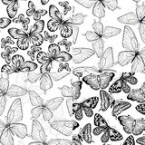 Set of beautiful monochrome black and white seamless background with butterflies. Stock Image
