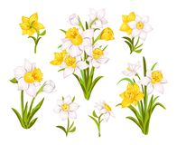 Set of beautiful narcissus flowers for cards, posters, textile etc. Cartoon narcissus vector illustration. Set of beautiful narcissus flowers for cards, posters royalty free illustration