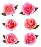 Set of beautiful pink roses. Royalty Free Stock Image