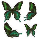 Set of beautiful realistic green butterflies over white Stock Photography