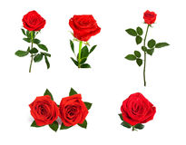 Set of beautiful red roses for design isolated on background Stock Photo