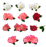 Set of a beautiful roses. Royalty Free Stock Image
