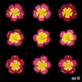 Set of beautiful vector flowers primrose. 9 elements for your de royalty free illustration
