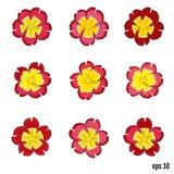 Set of beautiful vector flowers primrose. 9 elements for your de Stock Photo