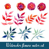 Set of beautiful watercolor flowers Stock Photography