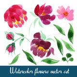 Set of beautiful watercolor flowers Royalty Free Stock Photography