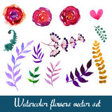 Set of beautiful watercolor flowers Stock Image