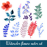 Set of beautiful watercolor flowers Royalty Free Stock Photo