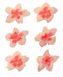 Set of beautiful watercolor flowers on white background, vector  illustration. Set of beautiful watercolor flowers on white, vector  illustration Stock Photo