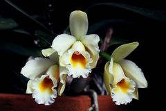 Set of beautiful white orchids. Wonderful and rare  white orchid flowers Stock Photos