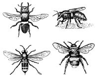 Set of bee engraved vintage hand drawn in scratchboard style Stock Photo