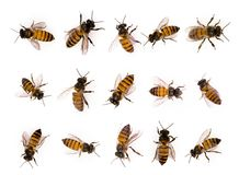 Set of bee isolated on white stock photos